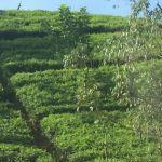 SriLanka6-03